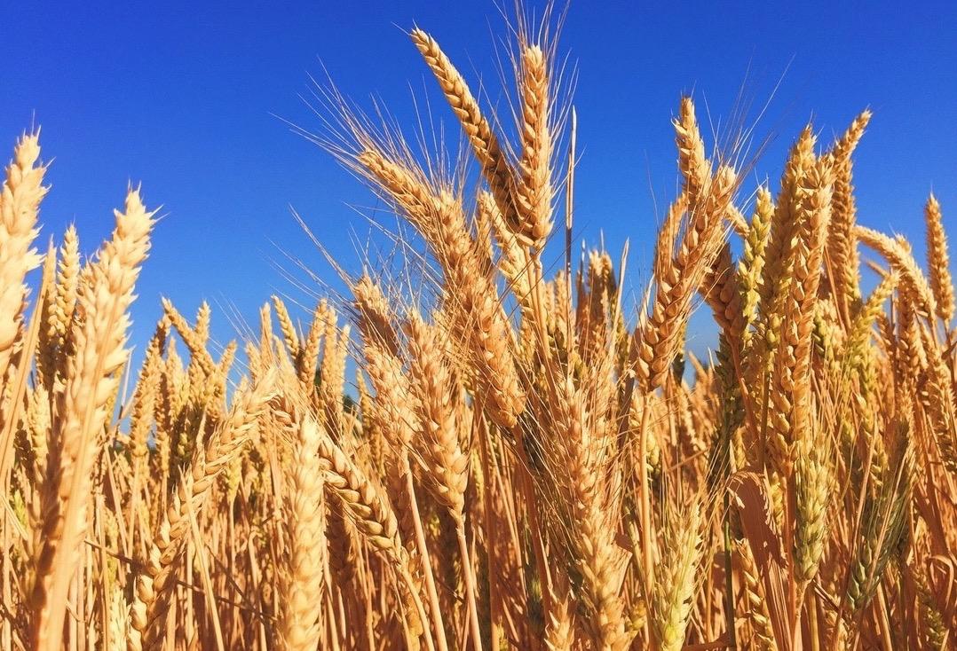Många mervärden i svensk odling