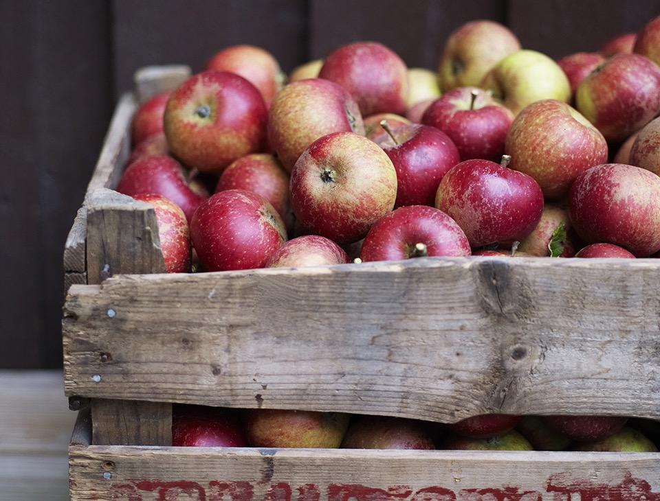 Skördetid! Svenska äpplen året runt!
