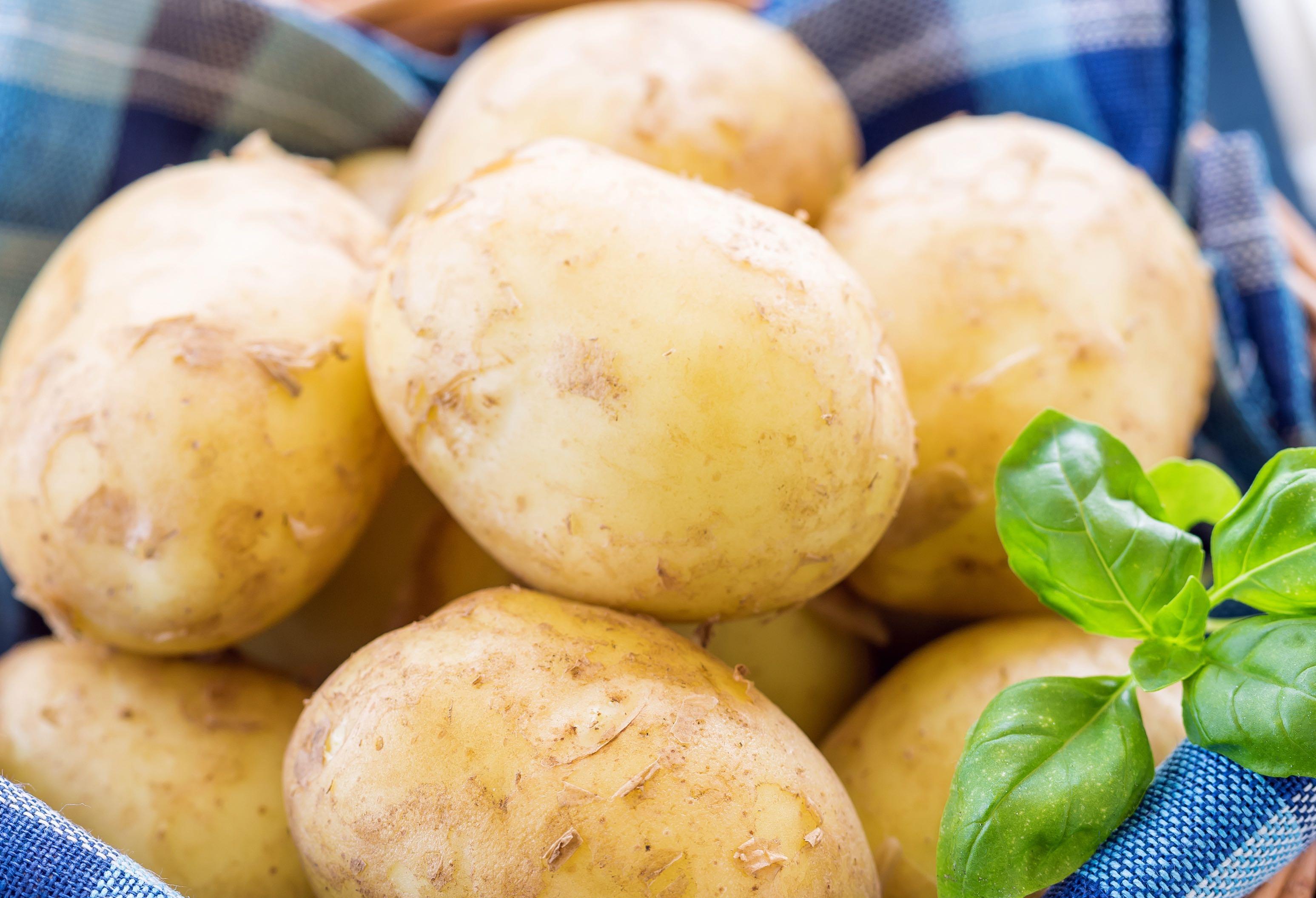 Fast eller mjölig potatis? Det är frågan!