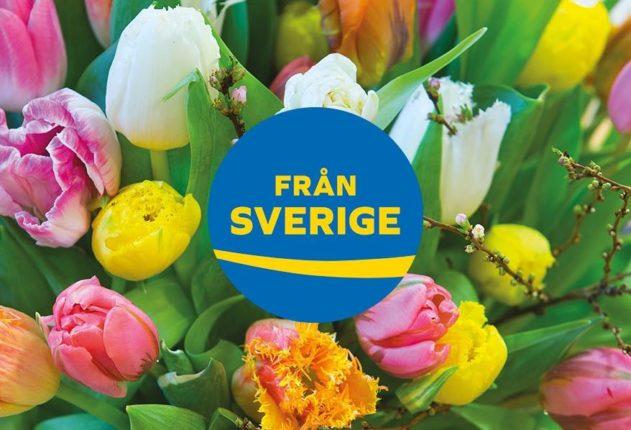Köp svenska växter och stötta svensk odling