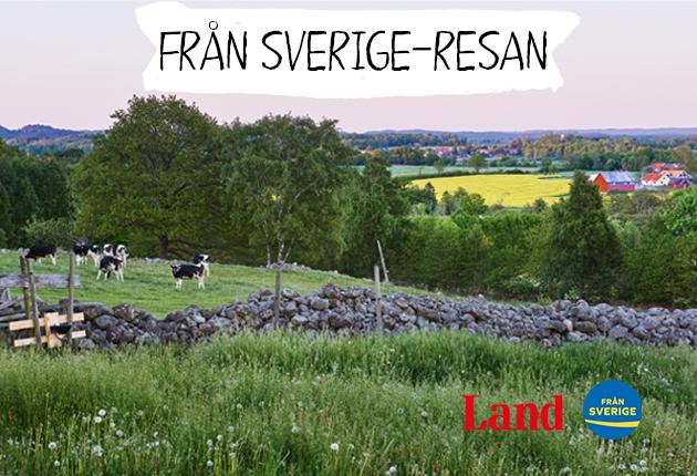 Från Sverige-resan sätter fokus på svenska råvaror