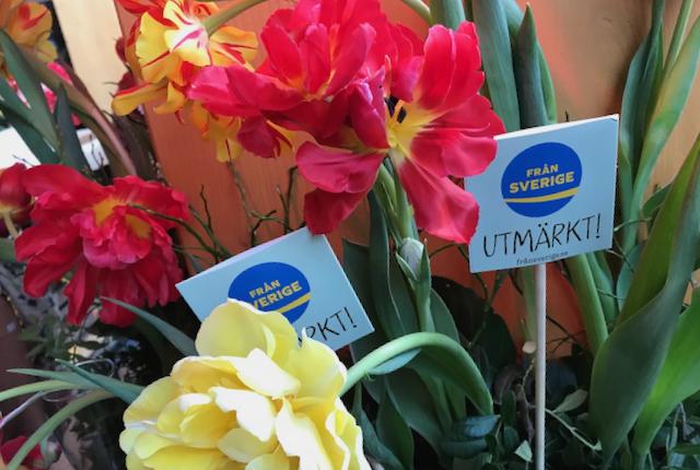 Blomsterfrämjandets Tulpankonsert, Mix Megapol