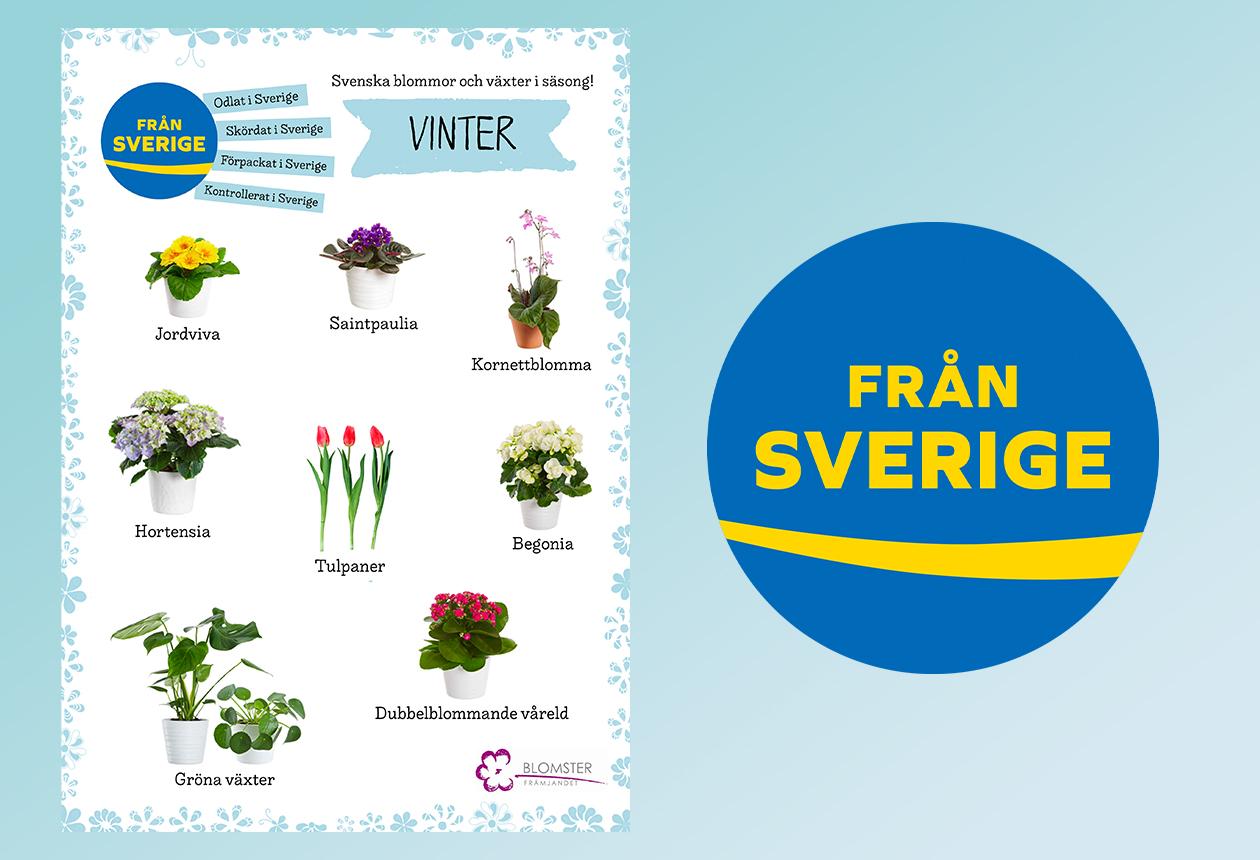 Säsongsguide svenskodlade blommor och växter