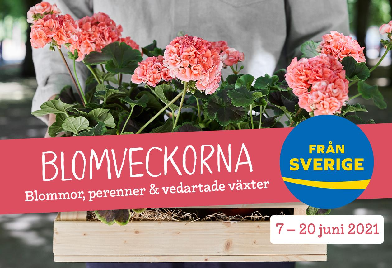 Blomveckorna Från Sverige — plantera mera!