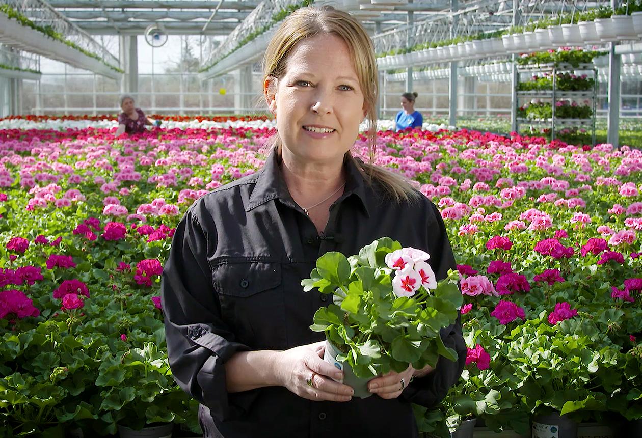 Här odlas svenska sommarblommor