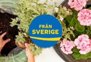 från sverige-märkta växter