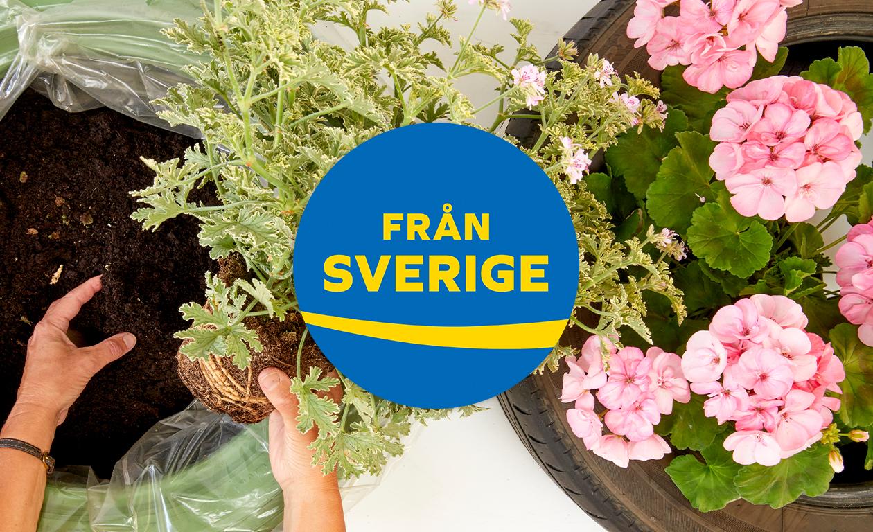 5 anledningar till att välja Från Sverige-märkta växter