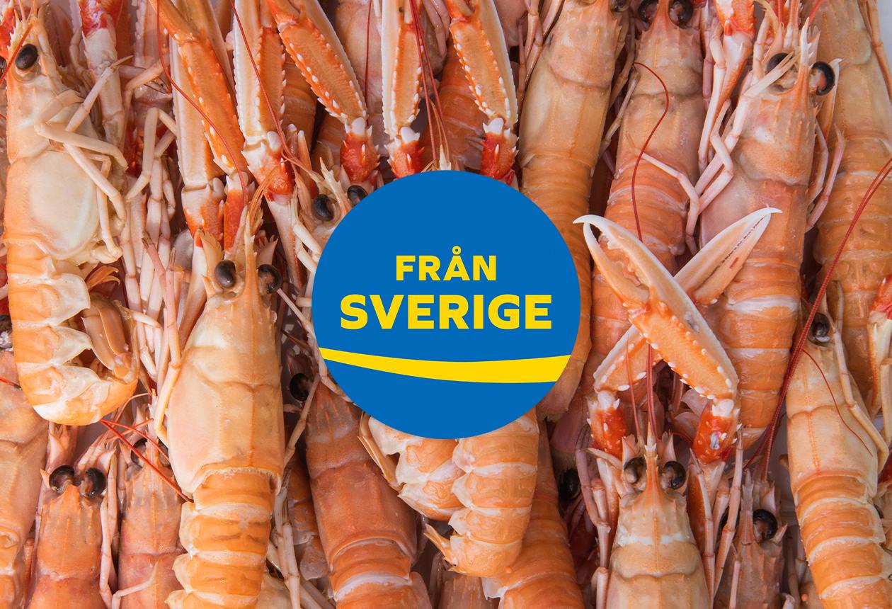 Bua Shellfish Från Sverige-märkta havskräftor & räkor